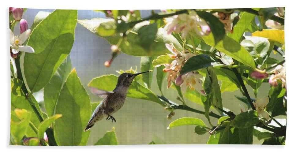 Hummingbird Bath Sheet featuring the photograph Hummingbird by Robert Phelan