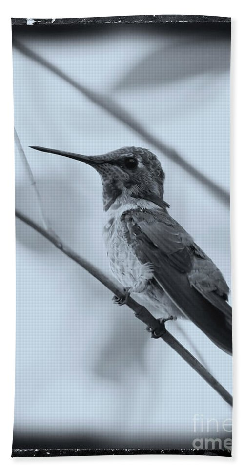 Hummingbird Bath Sheet featuring the photograph Hummingbird With Old-fashioned Frame 1 by Carol Groenen