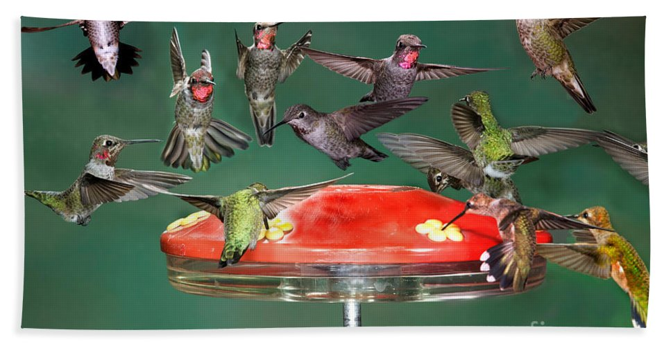 Fauna Hand Towel featuring the photograph Hummingbirds by Anthony Mercieca