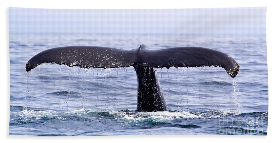 Humpback Whale Bath Sheet featuring the photograph Humpback Fluke by Liz Leyden
