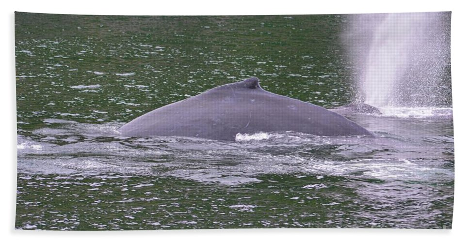 Whale Bath Sheet featuring the photograph Humpback Spew by Deanna Cagle
