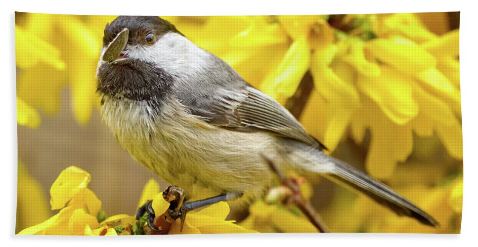Birds Bath Sheet featuring the photograph Hungry Bird by Bill Wakeley