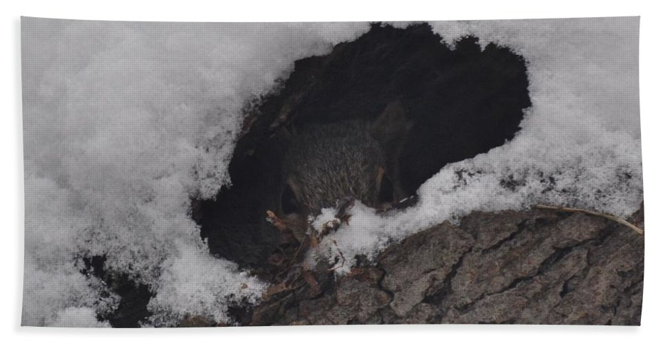 Squirrel Bath Sheet featuring the photograph Hunkered Down For The Storm by Juanita Doll