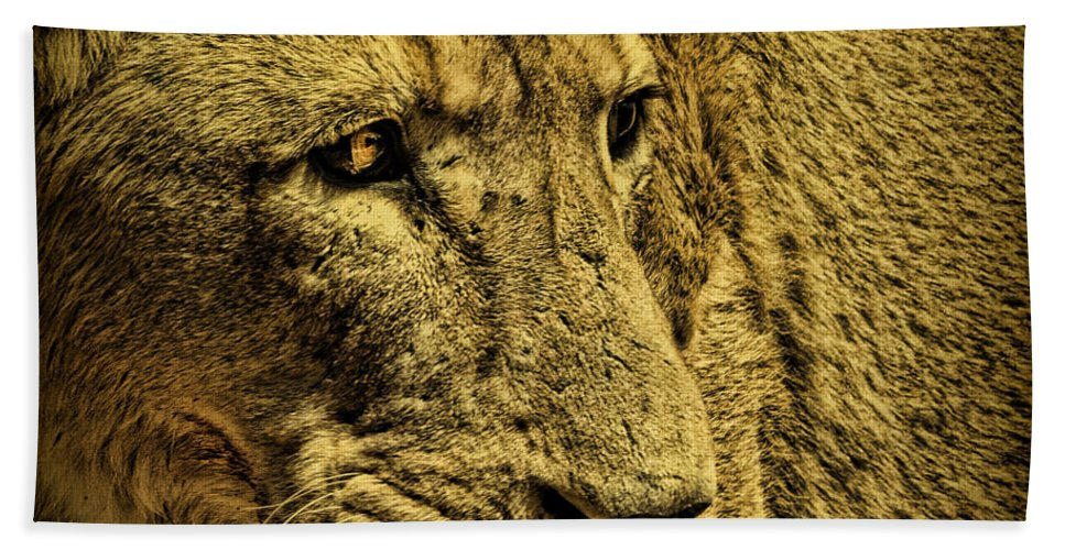Lion Bath Sheet featuring the photograph Hunter by Andrew Paranavitana