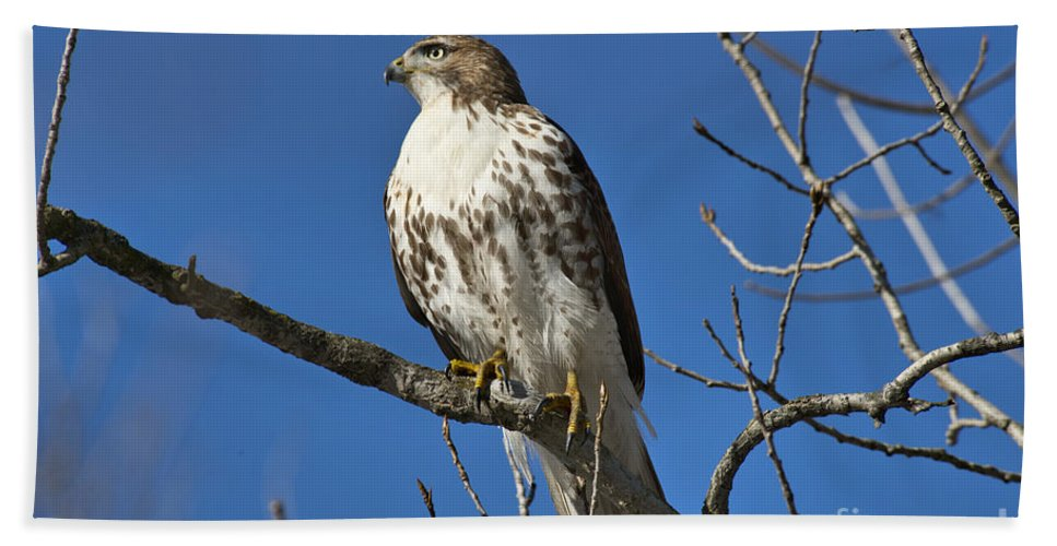 Hawk Hand Towel featuring the photograph Hunter by David Arment