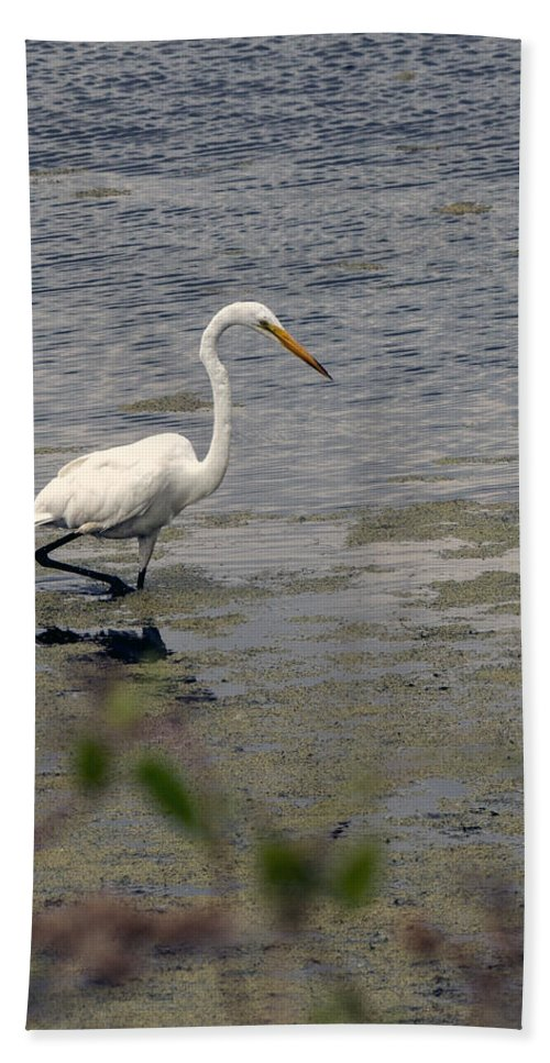 Great Egret Hand Towel featuring the photograph Hunting For Food by Jayne Gohr