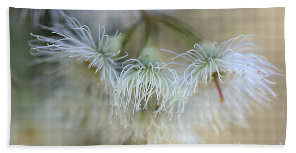 Eucalyptus Flower Bath Sheet featuring the photograph Hush by Joy Watson