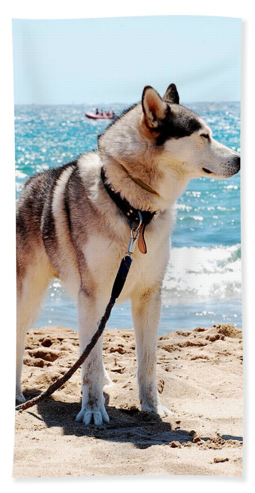 Husky Hand Towel featuring the photograph Husky On The Beach by Gina Dsgn