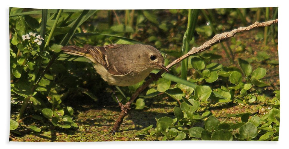 Nature Hand Towel featuring the photograph Hutton's Vireo by David Salter