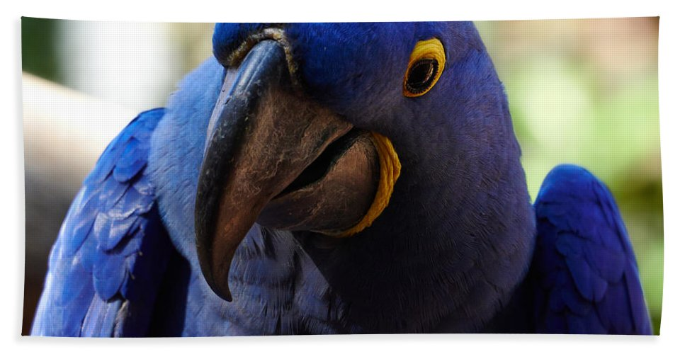 Atlantic Ocean Hand Towel featuring the photograph Hyacinth Macaw by Jouko Lehto