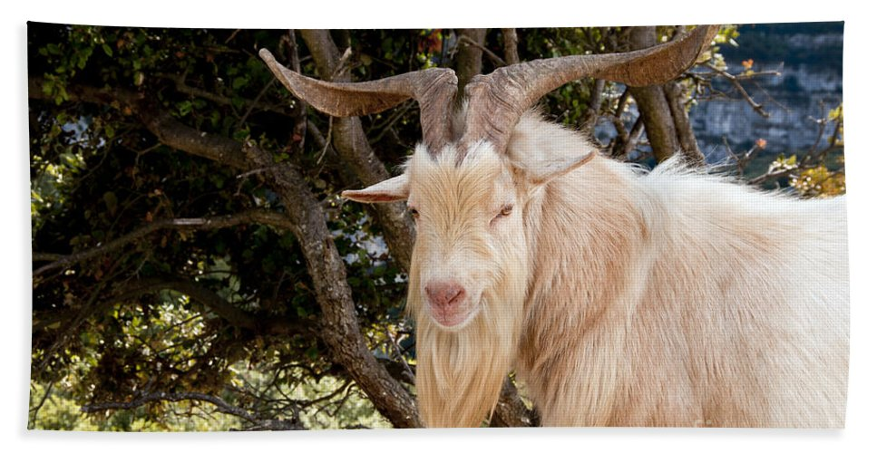 Gorges De L'ardèche France Gorge Canyon Canyons Mountain Goat Goats Animal Animals Creature Creatures Nature Horn Long Horns Bath Sheet featuring the photograph I Can See You by Bob Phillips
