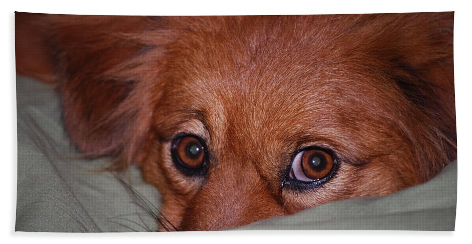 I Didn't Do It. Dog Hand Towel featuring the photograph I Don't Know by Robert Floyd