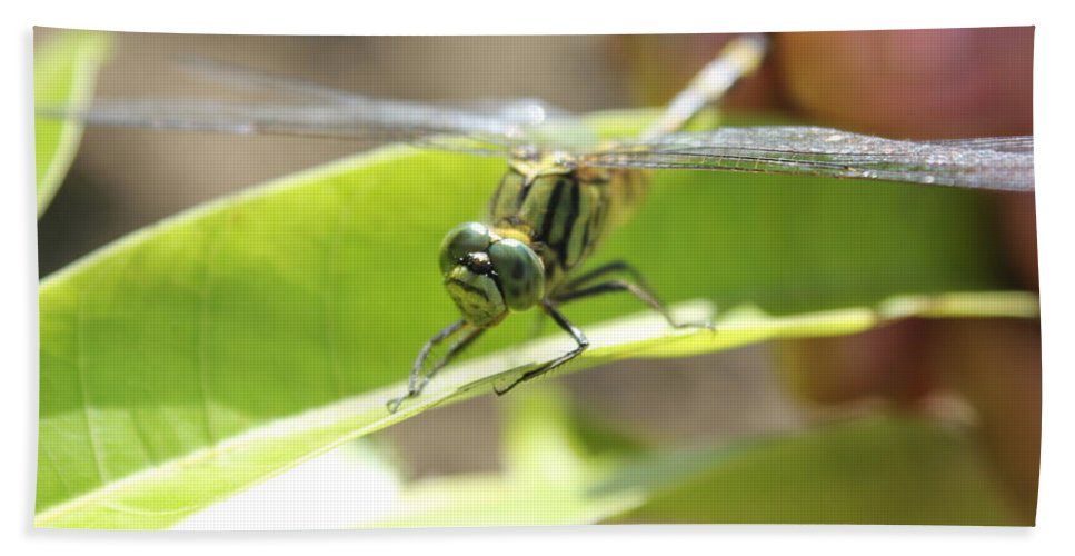 Dragonfly Bath Sheet featuring the photograph I Got You 2 by Lorna Maza