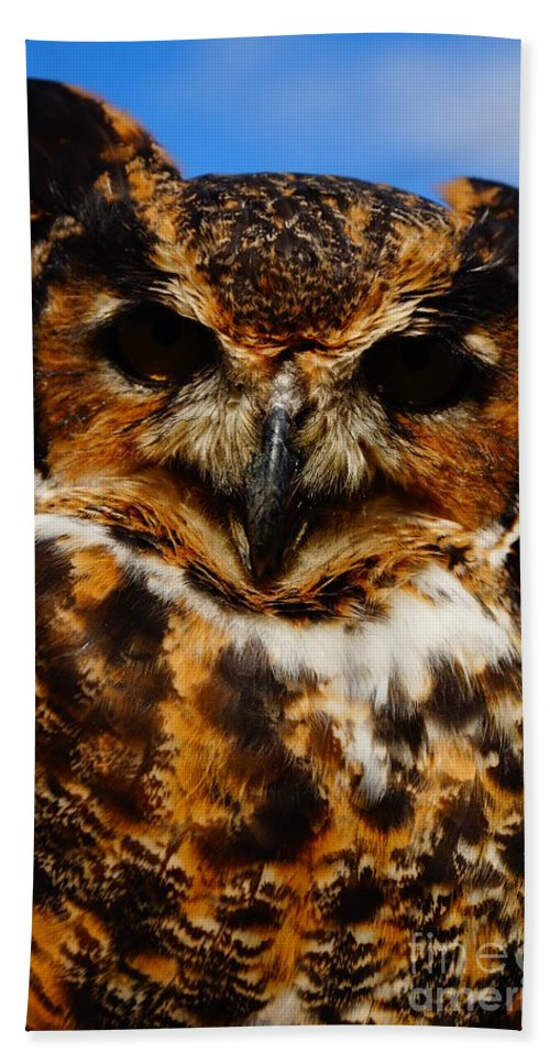 Owls Hand Towel featuring the photograph I Know What Your Thinking by Jeffery L Bowers