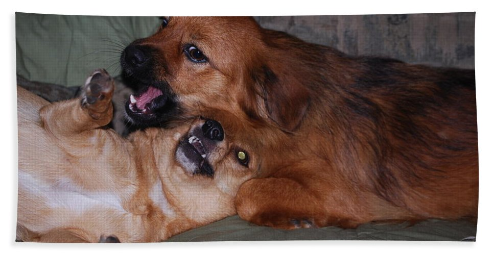 Foxy And Lady. Dogs Hand Towel featuring the photograph I Like You Too by Robert Floyd