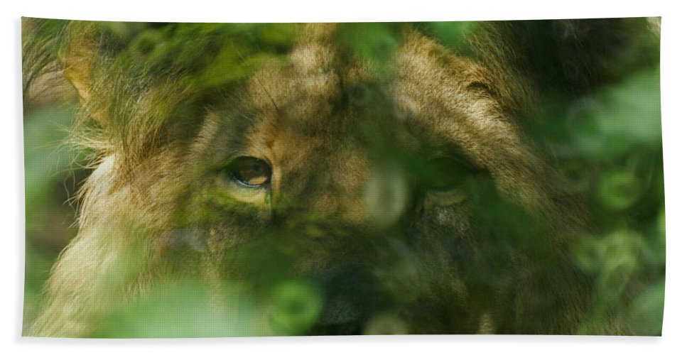 Animals Bath Sheet featuring the photograph I See You by Ernie Echols