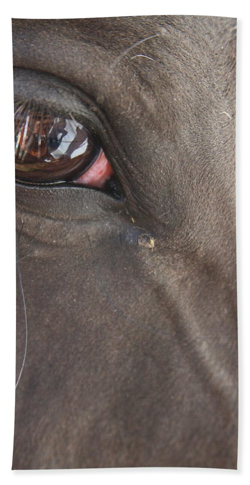 A Horse Stairs Back At Me As I Take Photos Of Him. Bath Sheet featuring the photograph I See You by Laddie Halupa