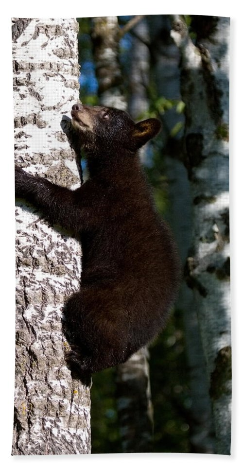Bears Hand Towel featuring the photograph I Think I Can . . . . by Myrna Bradshaw