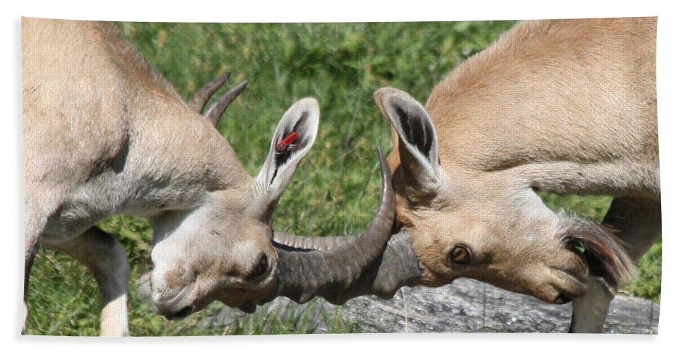 Ibex Doing Battle Bath Sheet featuring the photograph Ibex Doing Battle by John Telfer