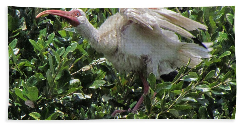 Ibis Bath Sheet featuring the photograph Ibis 12 by J M Farris Photography