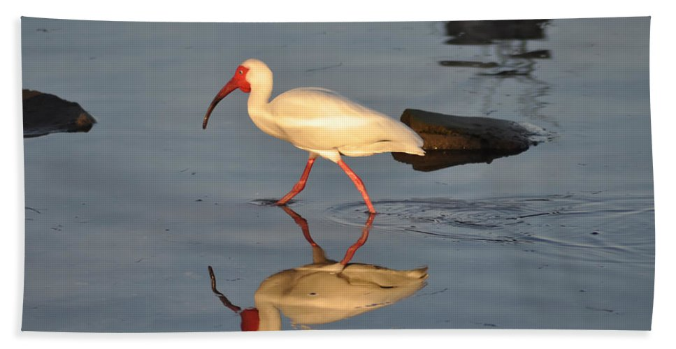 Ibis In Reflection Hand Towel featuring the photograph Ibis In Reflection by Bill Cannon