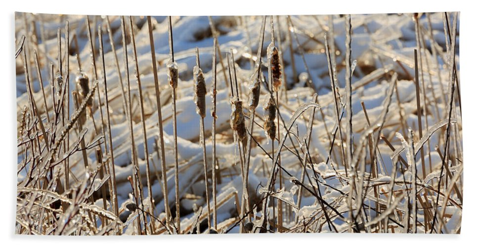 Ice Bath Towel featuring the photograph Ice Coated Bullrushes by Louise Heusinkveld