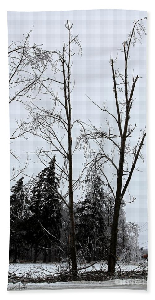 Mccombie Hand Towel featuring the photograph Ice Storm Poplars by J McCombie