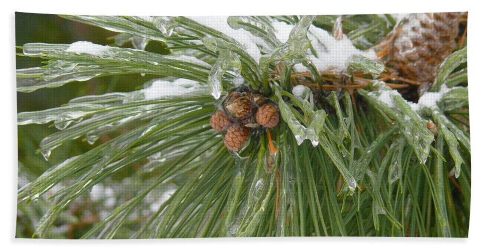 Pine Cone Hand Towel featuring the photograph Iced Over Pine Cones by Tracy Winter