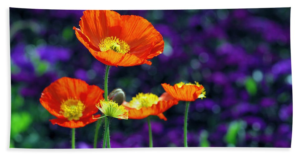 Background Bath Sheet featuring the photograph Iceland Poppy by Willo Breisacher