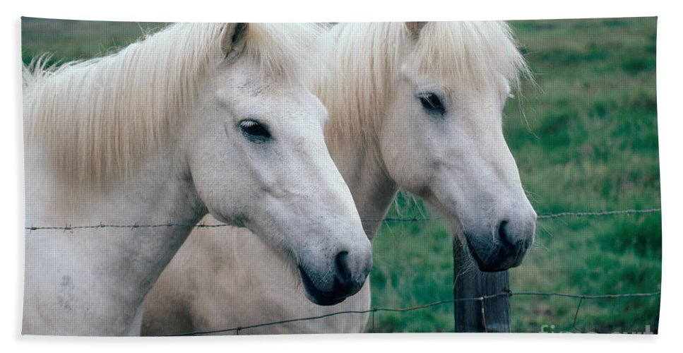 Fauna Bath Sheet featuring the photograph Icelandic Horses by Kenneth W Fink