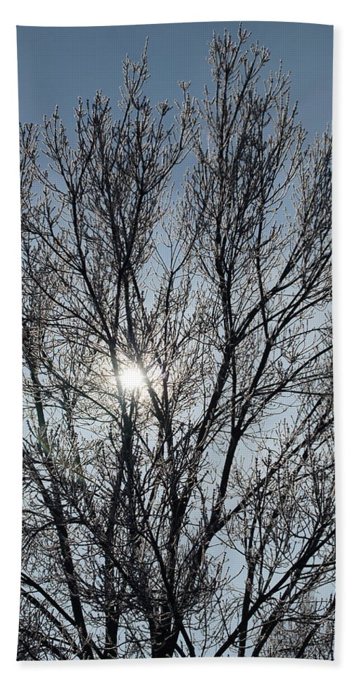 Icy Bath Towel featuring the photograph Icy Tree - Winter Morning by Mick Anderson