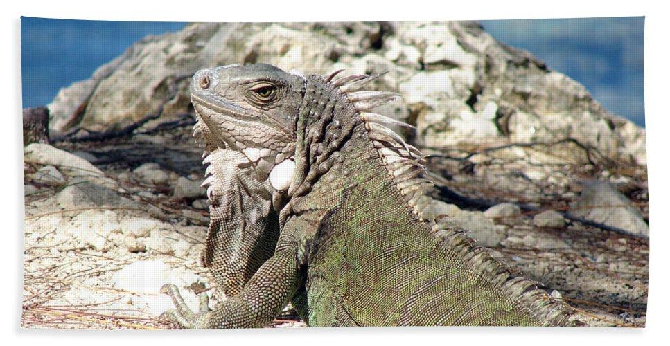 Iguana Bath Sheet featuring the photograph Iguana In The Sun by Leara Nicole Morris-Clark