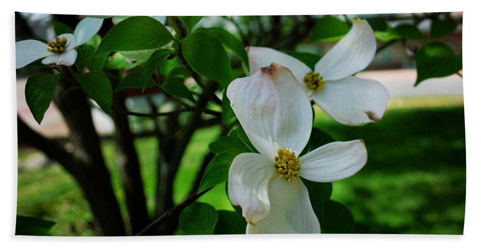 Vandalia Illinois Bath Sheet featuring the photograph Illinois Capitol Dogwood by Luther Fine Art