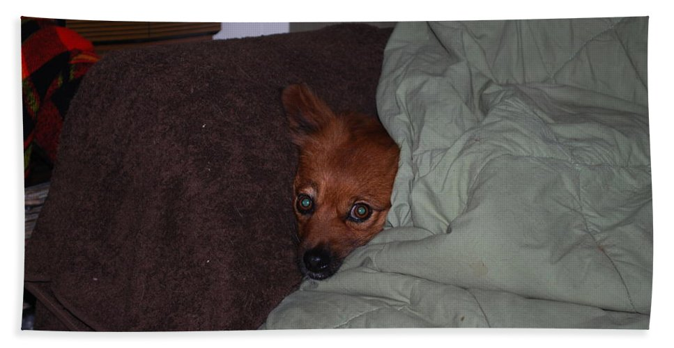 Foxy Under Cover Hand Towel featuring the photograph I'm Cold by Robert Floyd