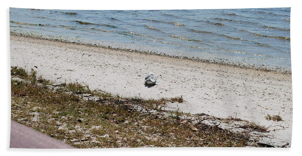 Seagull On Watch Hand Towel featuring the photograph I'm Waching You by Robert Floyd