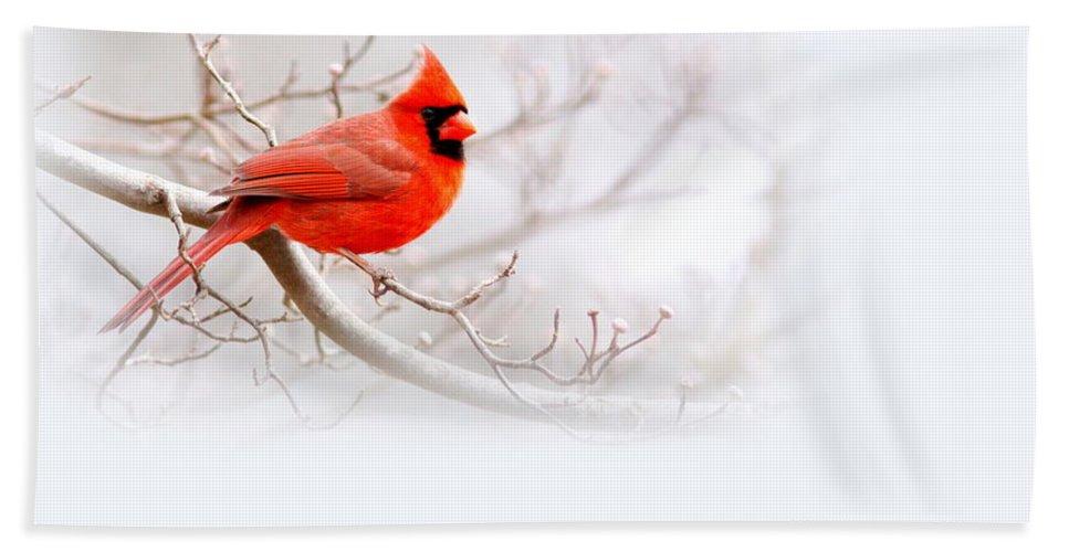 Cardinal Bath Sheet featuring the photograph Img 2559-10 by Travis Truelove