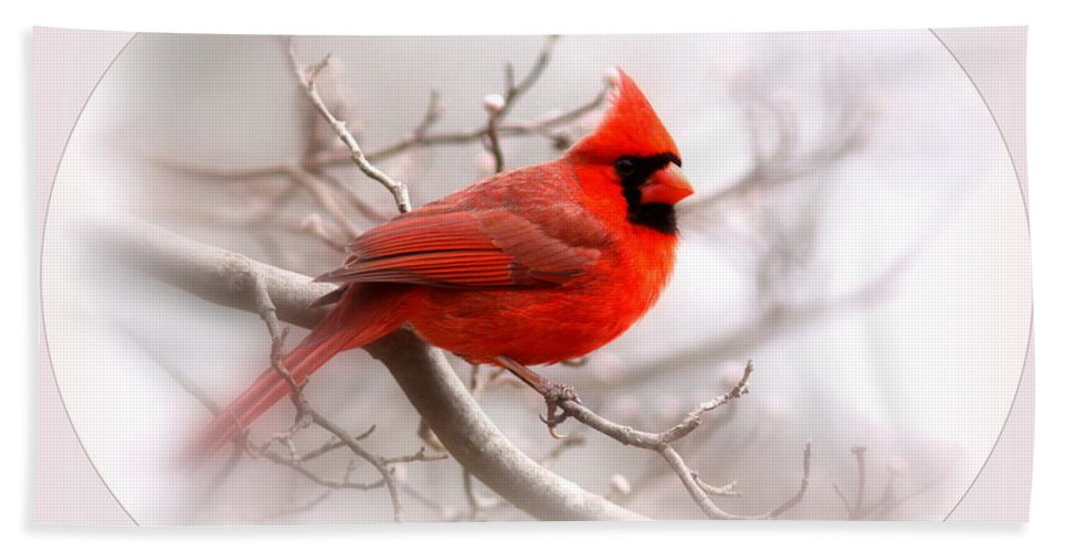 Cardinal Bath Sheet featuring the photograph Img 2559-18 by Travis Truelove