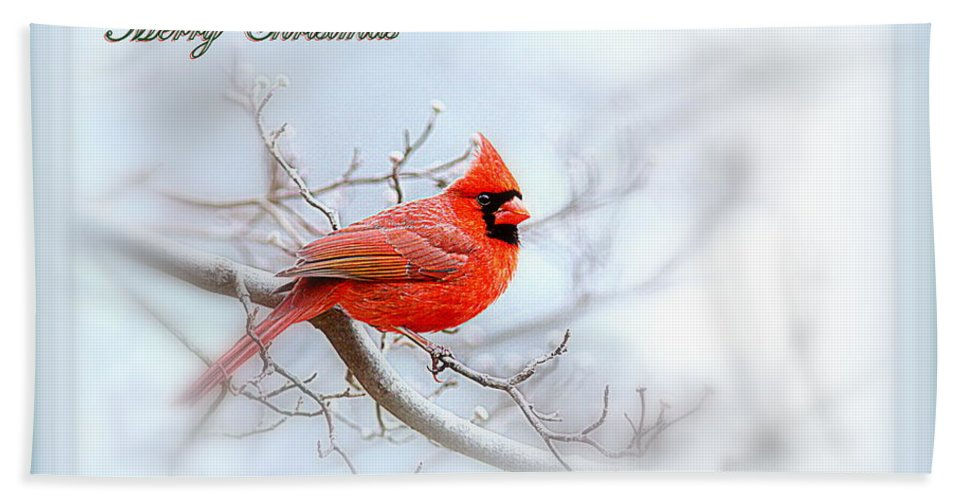 Cardinal Bath Sheet featuring the photograph Img 2559-37 by Travis Truelove