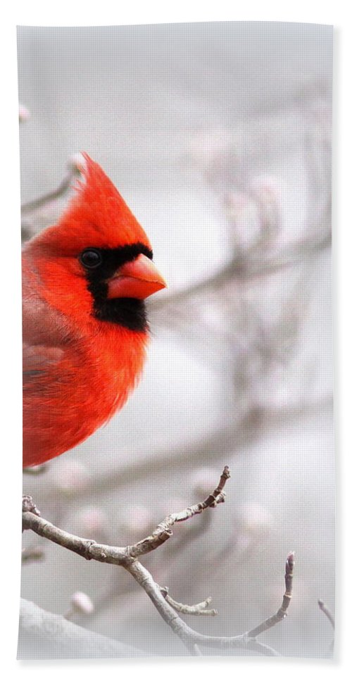 Cardinal Bath Sheet featuring the photograph Img 2559-5 by Travis Truelove
