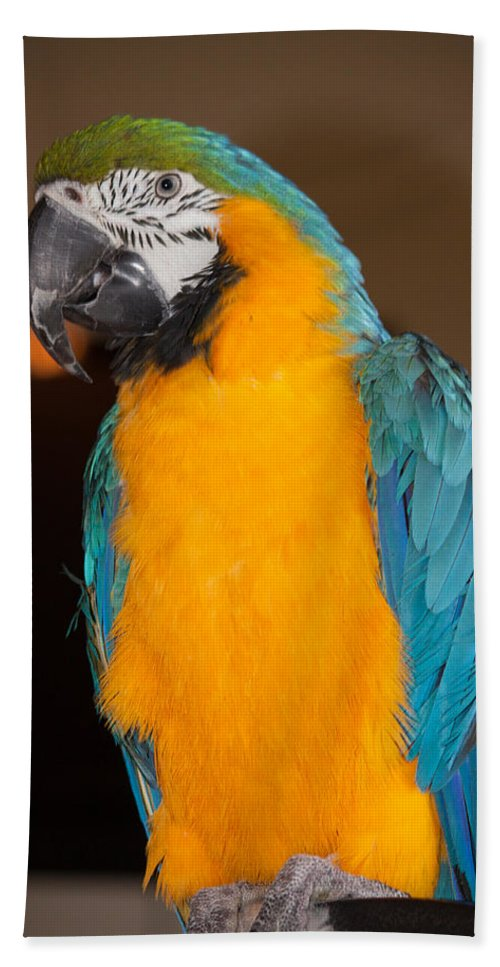 Parrot Hand Towel featuring the photograph Img B67 by Steve Herndon