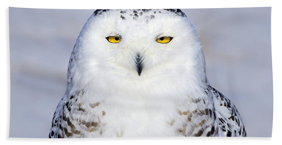 Snowy Owl Bath Sheet featuring the photograph Immaculate by Tony Beck