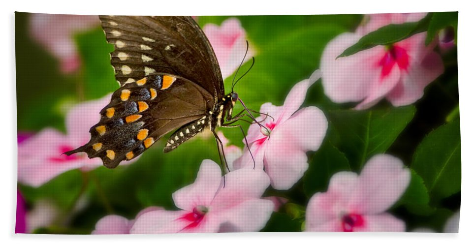 Butterfly Hand Towel featuring the photograph Impatient Swallowtail by Bill Wakeley