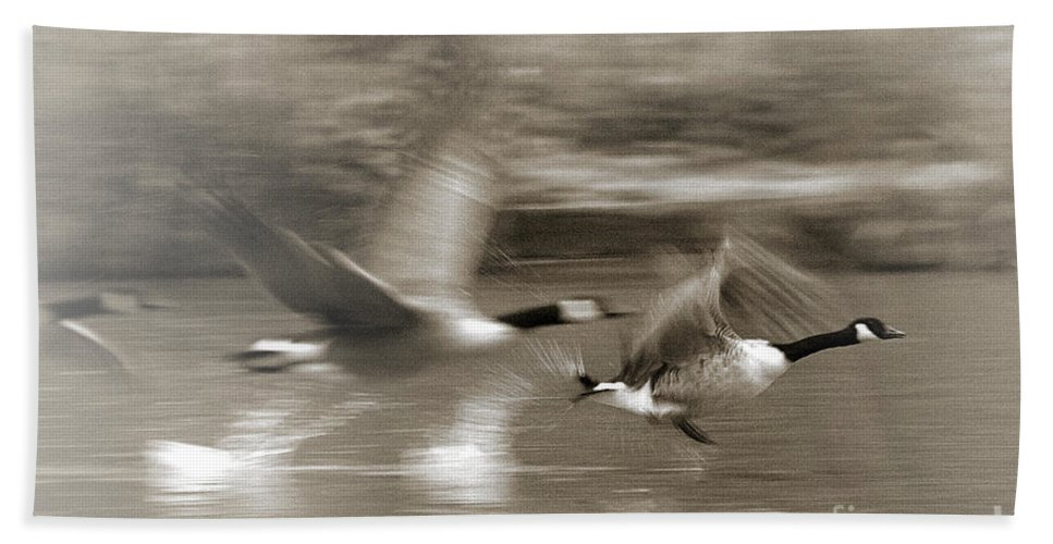 Canada Geese Bath Sheet featuring the photograph In A Blur Of Feathers by Jeremy Hayden