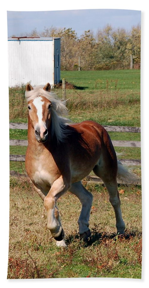 Haflinger Hand Towel featuring the photograph In Motion by Annette Persinger
