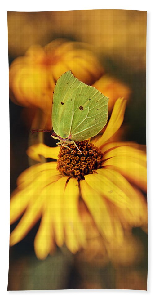 Macrophotography Hand Towel featuring the photograph In My Garden by Jaroslaw Blaminsky