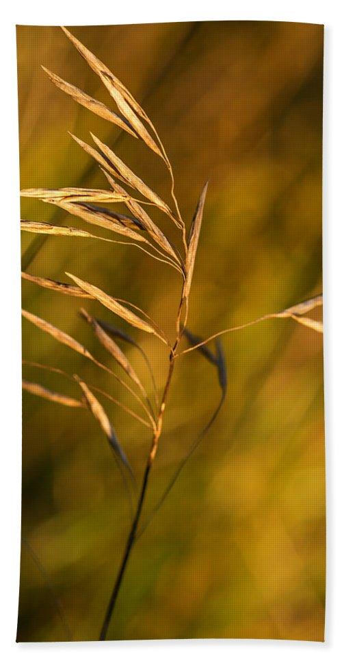Steve Harrington Bath Sheet featuring the photograph In Praise Of Grass 3 by Steve Harrington