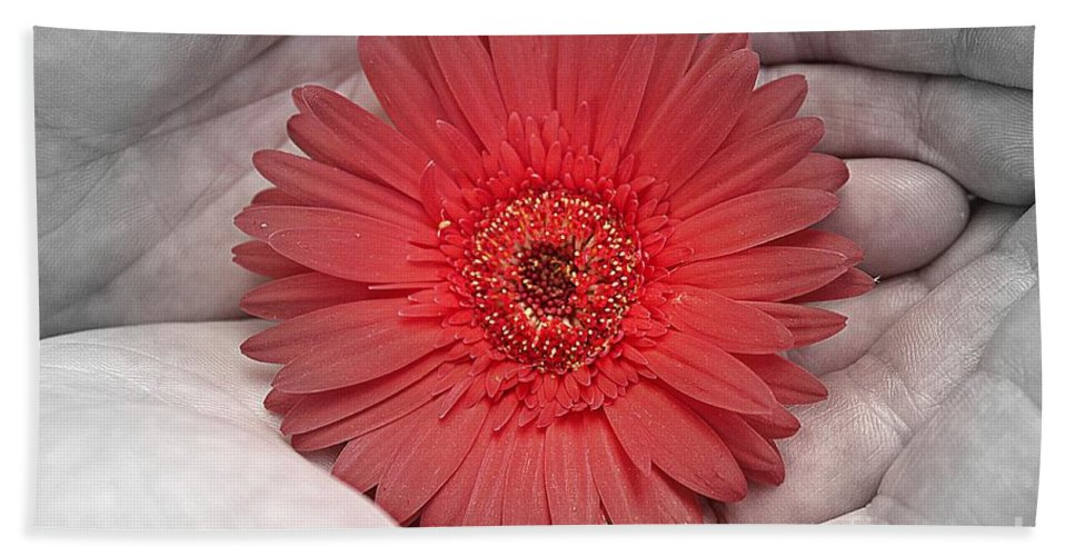 Gerbera Hand Towel featuring the photograph In Strong Hands by Clare Bevan