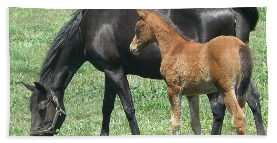 Horse Bath Sheet featuring the photograph In The Field by Debby Pueschel