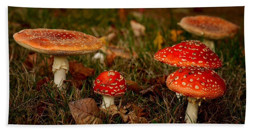 Agaric Hand Towel featuring the photograph In The Forest by TouTouke A Y