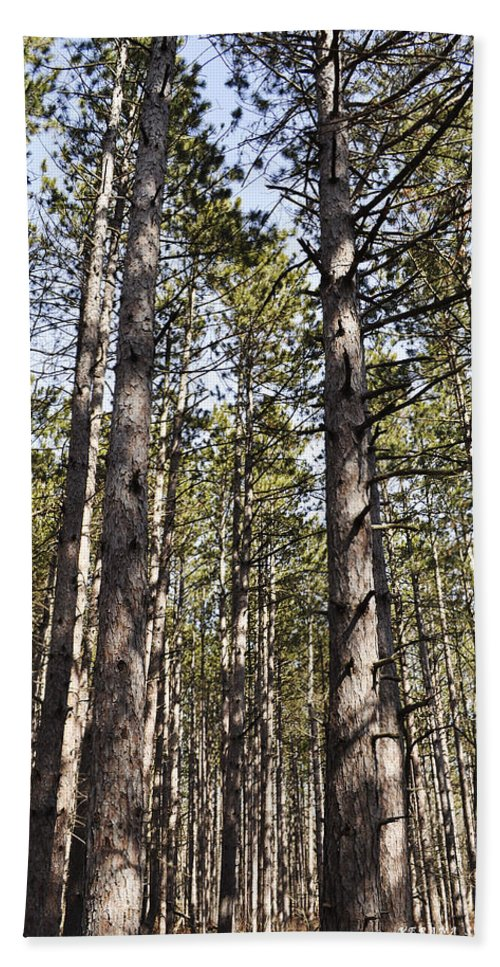 Forest Hand Towel featuring the photograph In The Forest by Verana Stark